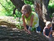 bimbi-alberi-615x473.jpg